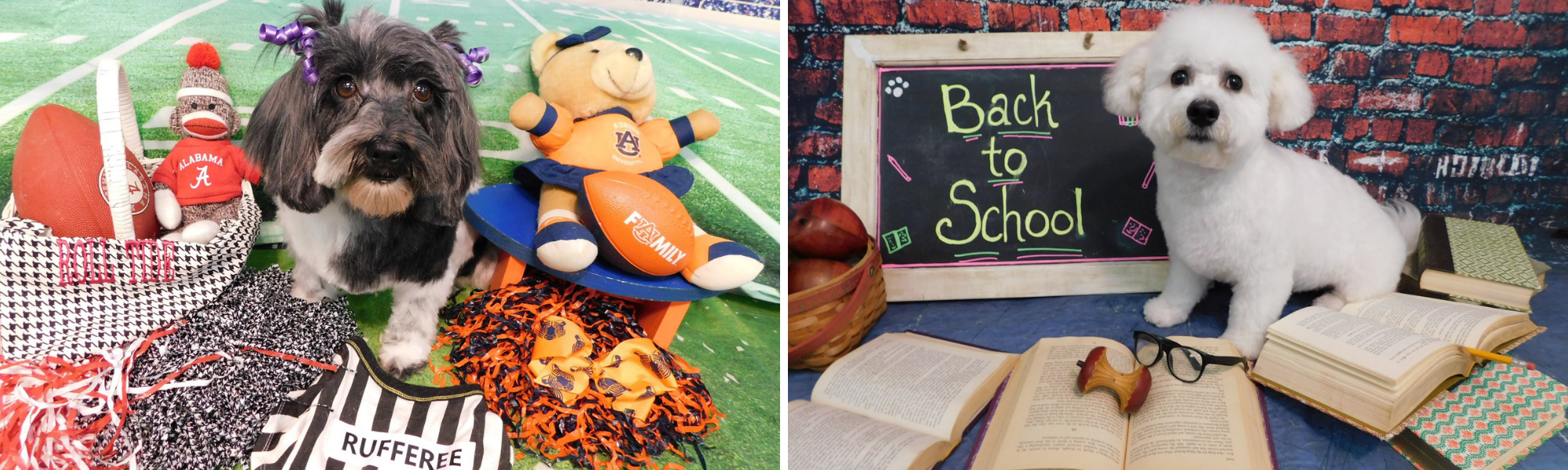 Football & Back to School Pet Photos